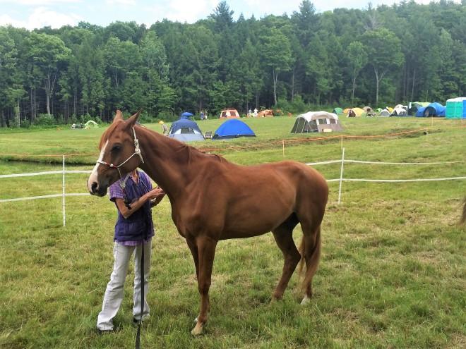 Vermont Horse